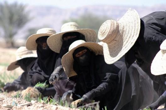 Un grupo de mujeres yemeníes plantando semillas